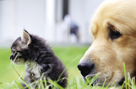 General Image - Kitten and Retriever