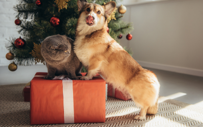 image for The Best Holiday Gifts for Your Pet this Year!